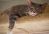 sixcats-025