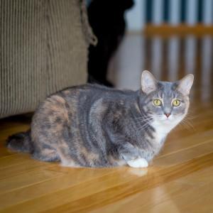 sixcats-043