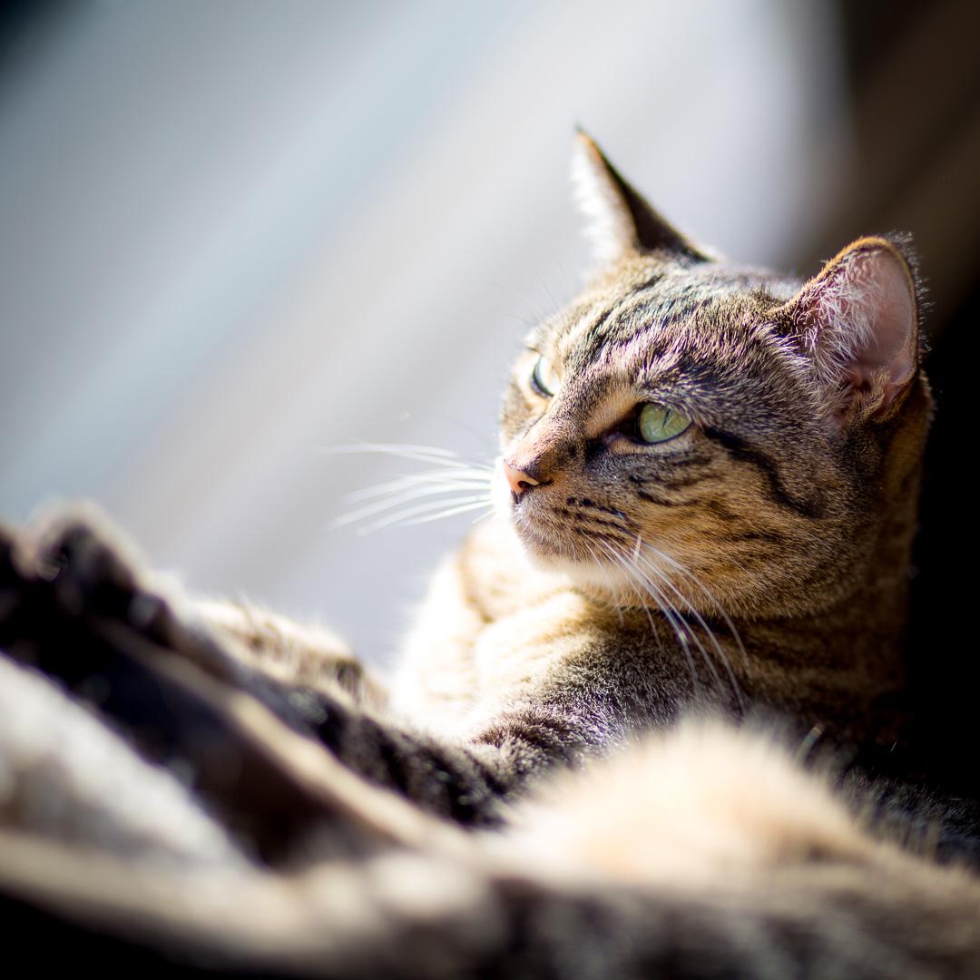sixcats-048