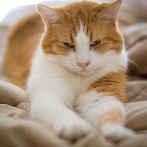 sixcats-053