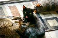 sixcats-096