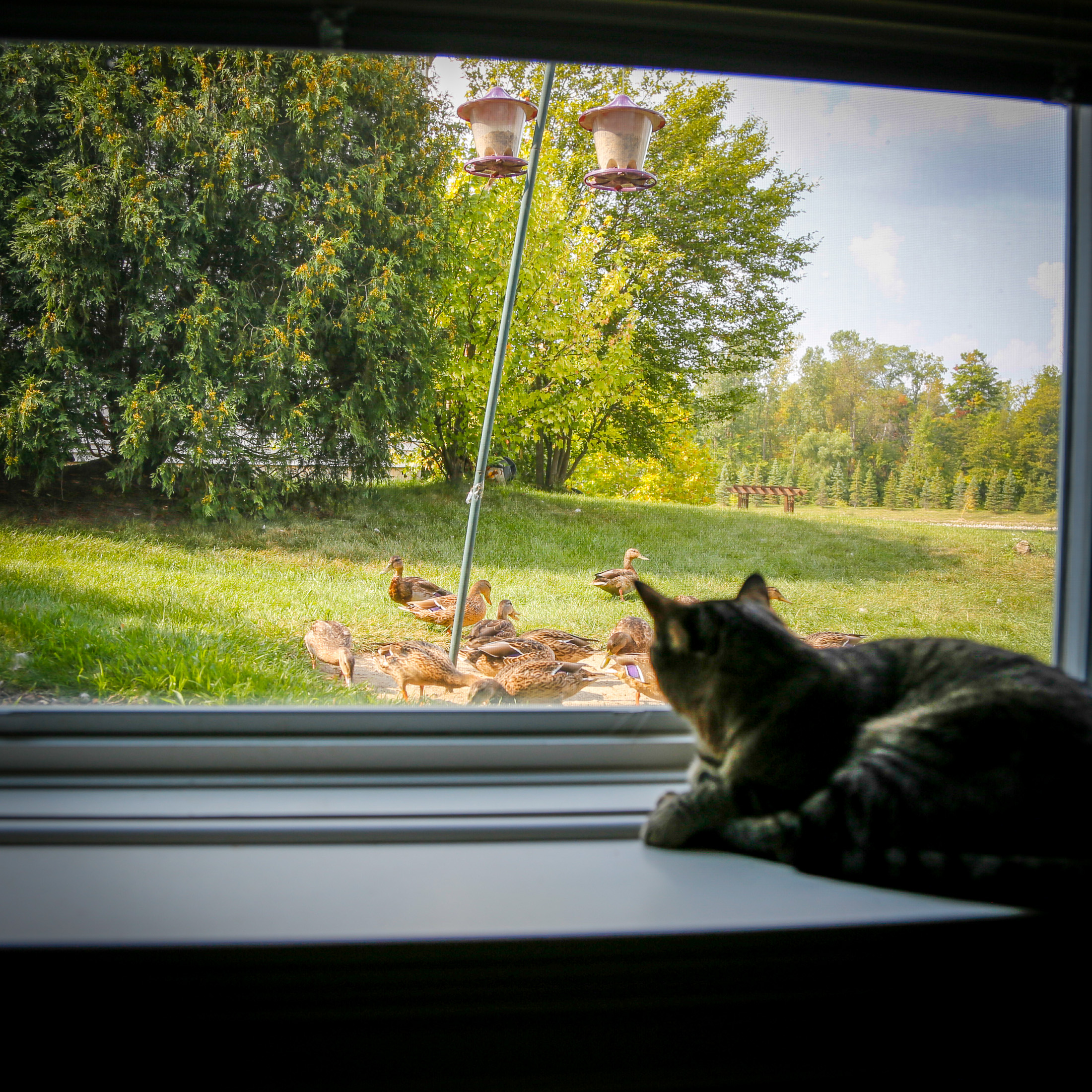 sixcats-081