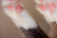 sixcats-105